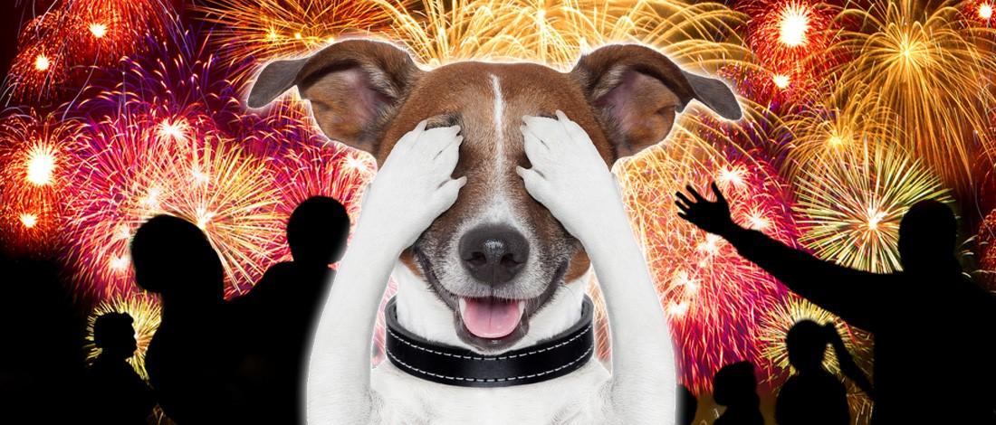 Photo of Is jouw huisdier bang voor vuurwerk?