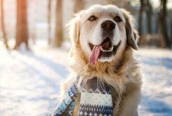 hond in de winter