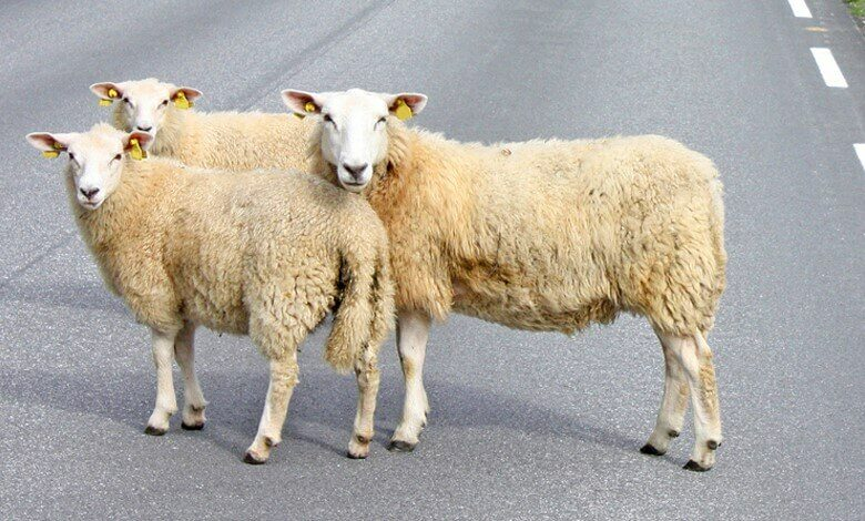 Overstekende dieren voorrang geven? | Verzekeruzelf