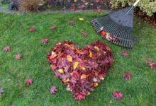 Photo of Tijd voor de herfst! Zijn jouw huis en tuin al herfstklaar?